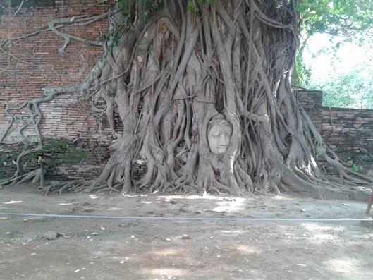 木の根元に埋まった仏頭
