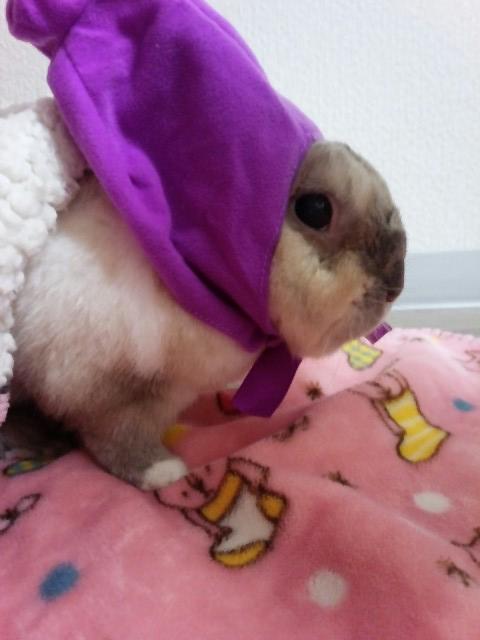 うさぎ飼育日記① ~ペットうさぎのかわいいお洋服inハロウィン~
