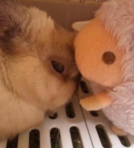 小さい雑種スーパーミニウサギって?~うさぎの大きさ~