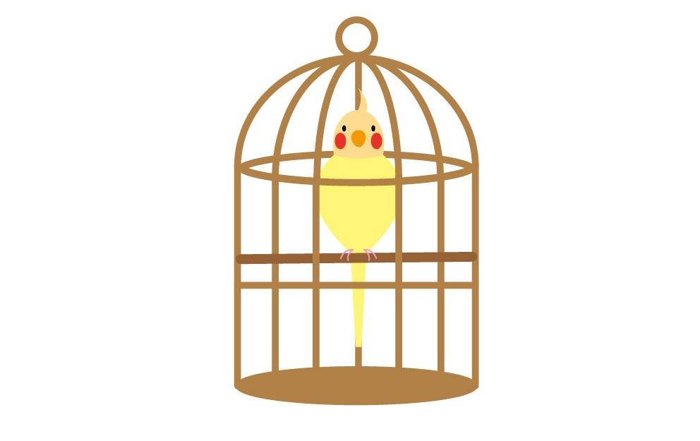うさぎと小鳥を一緒に飼える?ストレスと病気から考える同居問題