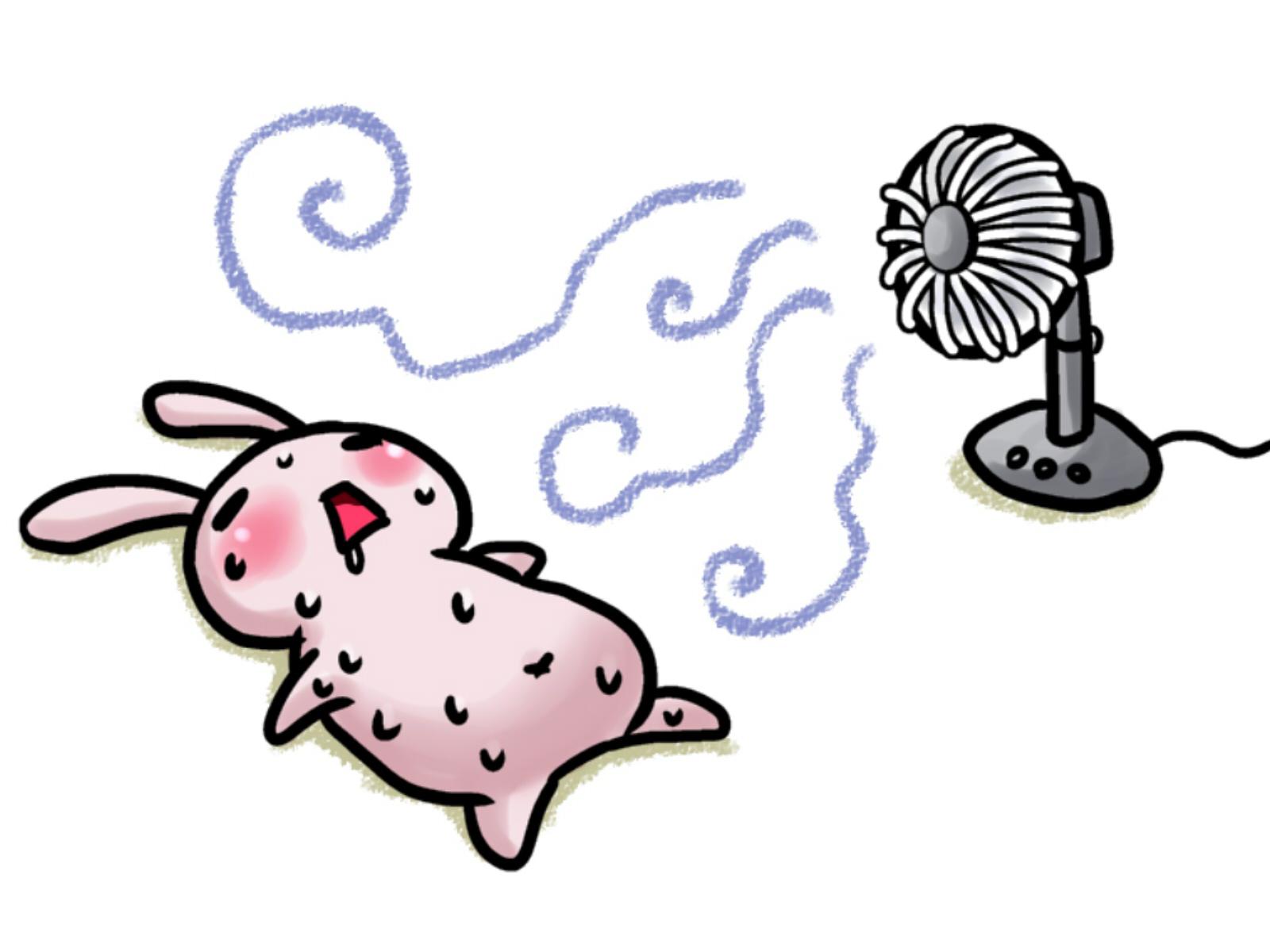 うさぎの夏の暑さ対策、飼育方法の注意点 まとめ